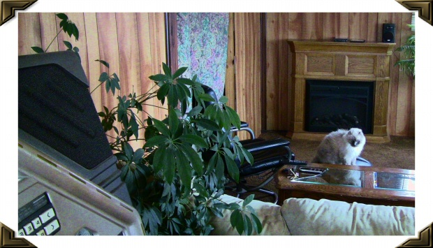 Low Priced  Motels Manly Iowa Worth County Pet Friendly Economy